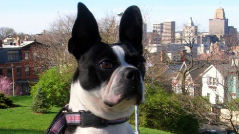 Keeping Dogs Safe During Easter, Sniff Seattle Dog Walkers