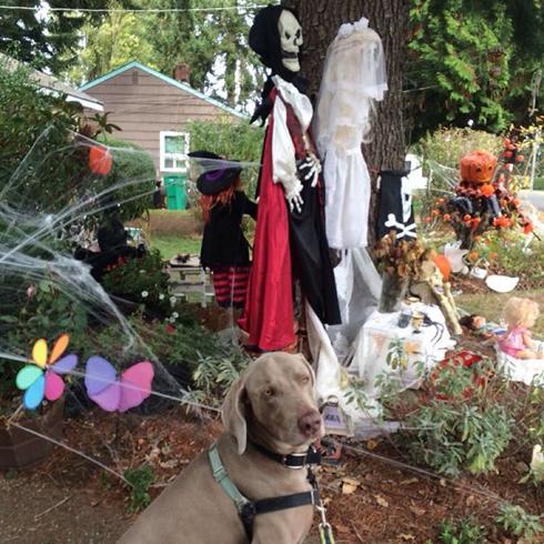 Halloween Weeding